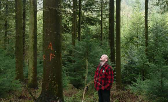 Selecting Douglas fir trees at Stourhead Western Estate.