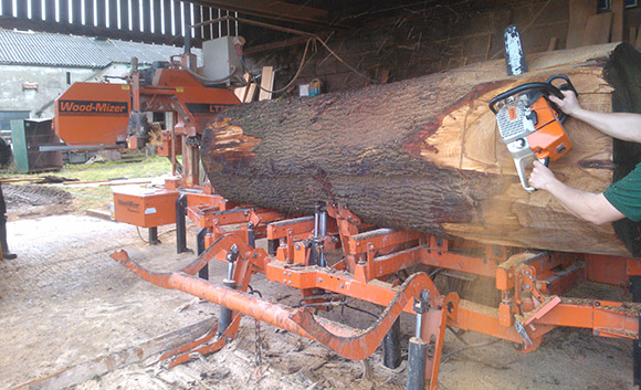 Cutting large oak tree for Barrow Hill House.