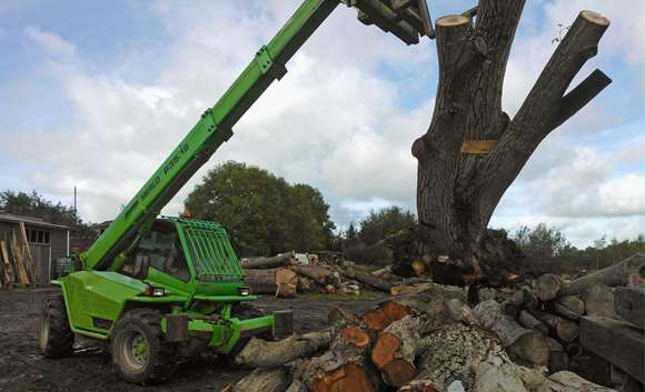 Delivery of Walnut stump from Wells.